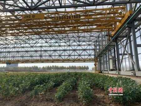南京农高区里的作物表型仓。 中新网 彭婧如 摄